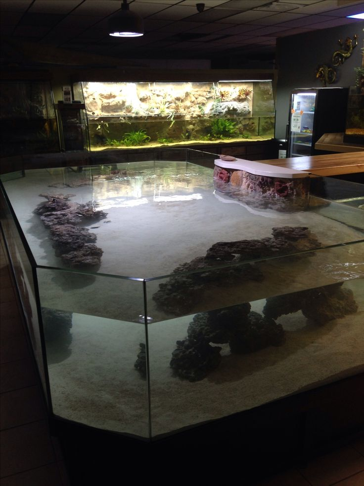 25 best ideas about stingray tank on pinterest freshwater fish discus and stingrays - Fish tank coffee table amazon ...