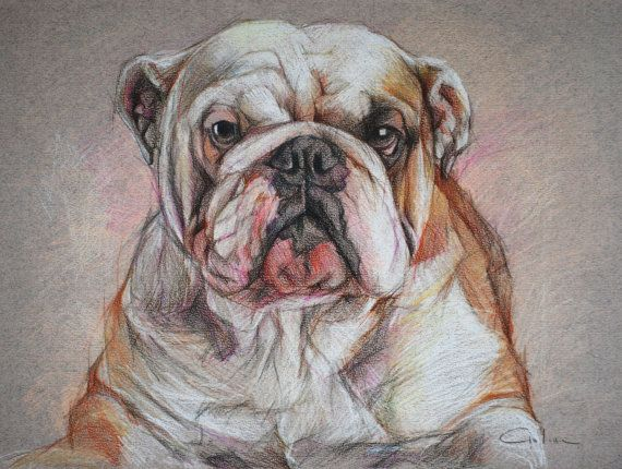 English Bulldog ART Pet Portrait Drawing by
