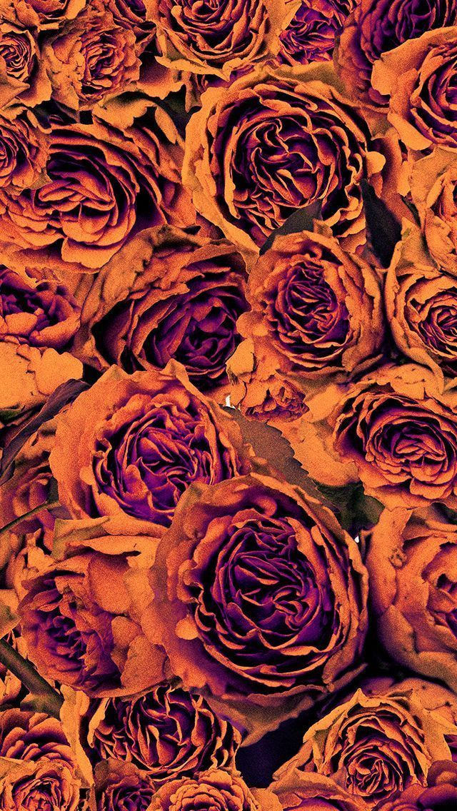 Orange Purple Autumn Floral Roses Iphone Phone Wallpaper Background Lock Screen Fall Wallpaper Pretty Wallpapers Orange Wallpaper