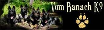Working German Shepherd Breeder | DDR German Shepherd Breeder