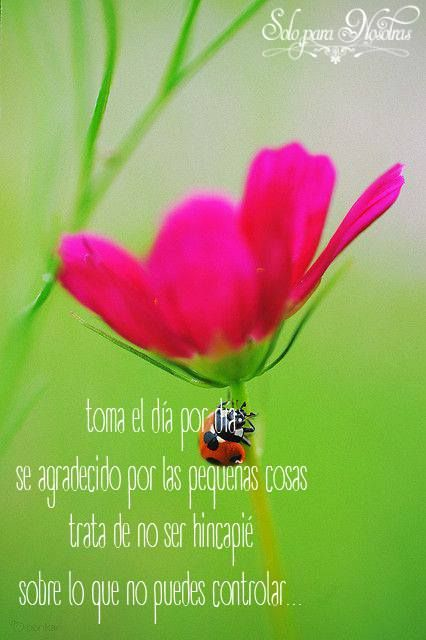 Lady Bug Guarding A Garden Beauty