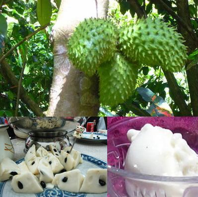 SOURSOP fruit, leaves and seeds, are useful as a natural remedy to treat a variety of diseases including Cancer, Lumbago, Ulcers, Bladder Pain. It's also believed to cure various kinds of other diseases such as heart disease, catarrh, gallbladder problems, leprosy, cough, diarrhea, fever, dysentery, diarrhea, and indigestion.