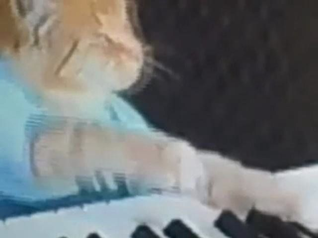 Doseone's cat Purple takes inspiration from the keyboard cat.