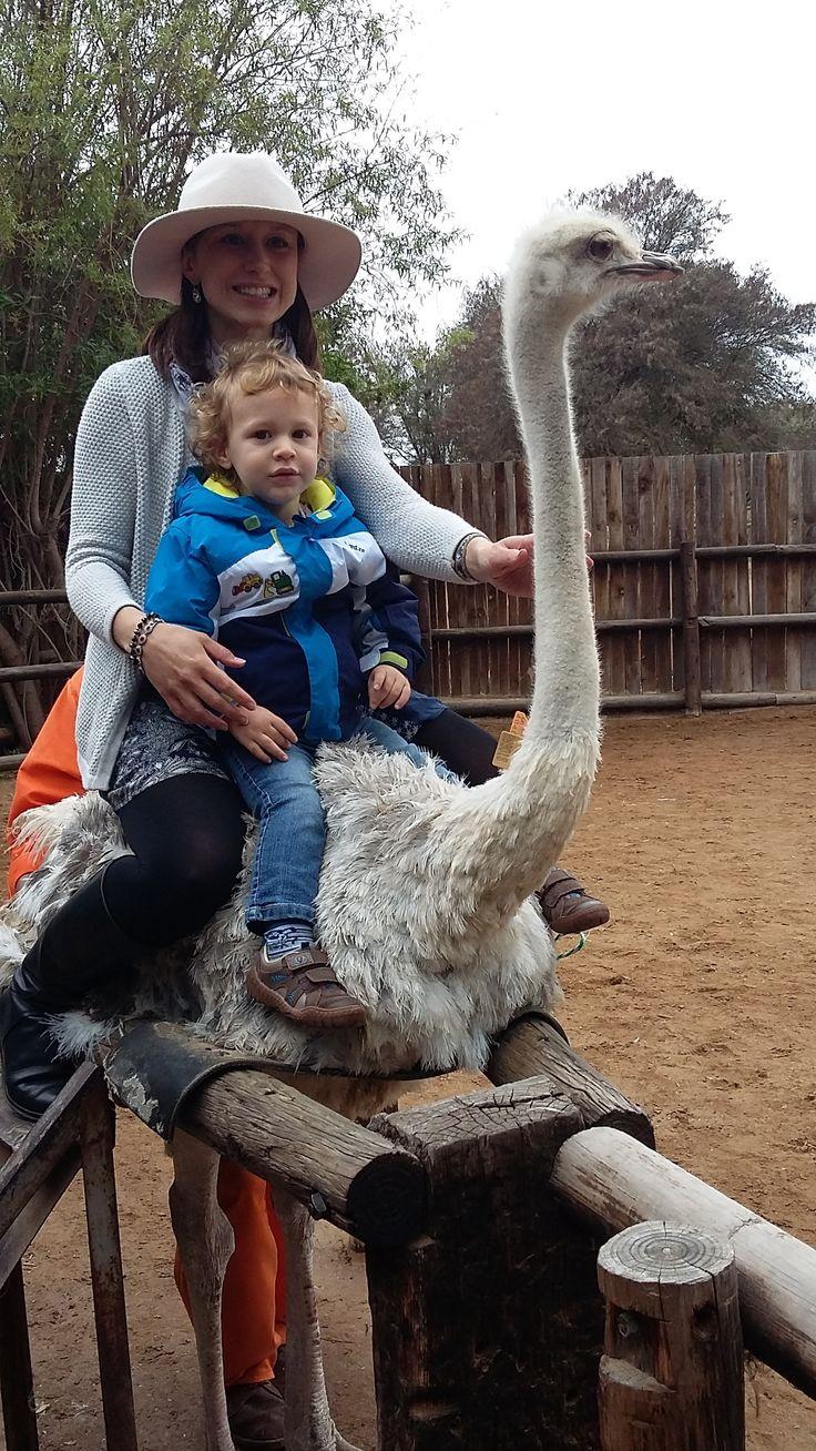 Beautiful photo's on white #ostrich at #safari #ostrichshowfarm