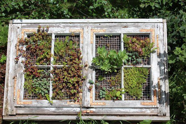 die besten 25 mooswand ideen auf pinterest moss wandkunst moos kunst und coole wandkunst. Black Bedroom Furniture Sets. Home Design Ideas