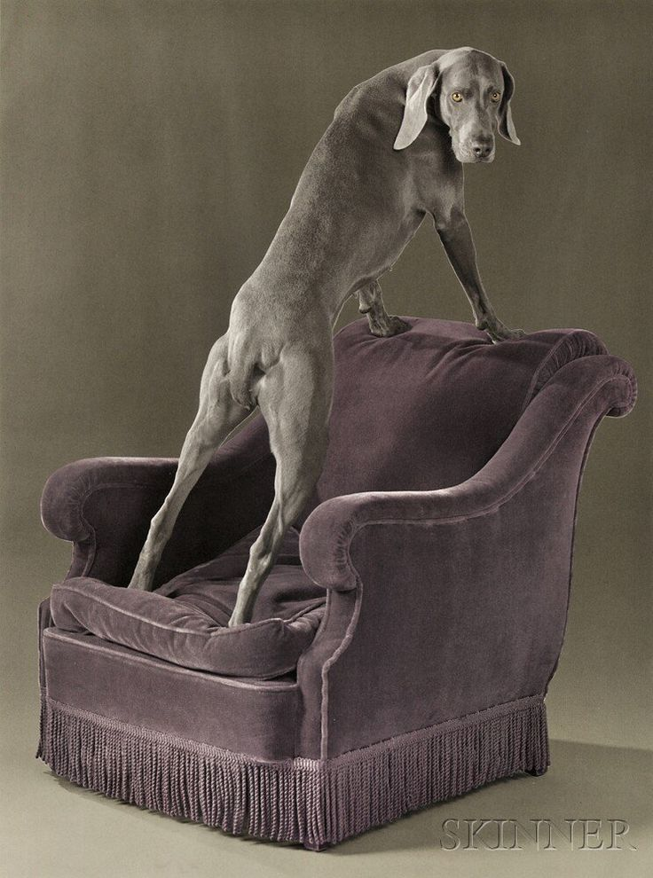 William Wegman (American, b. 1943) Back View. | Auction 2930B | Lot 162 | Estimate Sold for $1,169