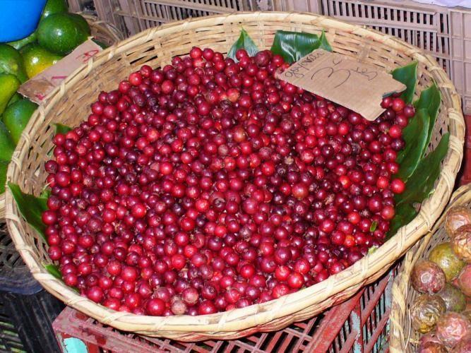 Goyaviers de la Reunion...mmmmm Think mini pomegranate