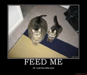 That's a huge cat!Funny Pictures, Funny Cat, Demotivational Posters, Funny Stuff, Fatcats, Fat Cats, Funny Animal, Weights Loss, Kitty