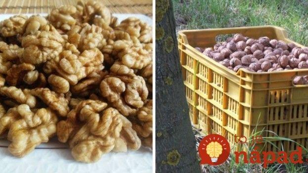 Nezatuchnú, nesplesnivejú: Naučte sa perfektný a úplne jednoduchý spôsob, ako uchovať orechy na celé roky!