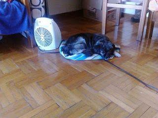 Αυτο το μικροσωμο σκυλακι βρεθηκε στον Νεο Κοσμο την προηγούμενη Κυριακή.