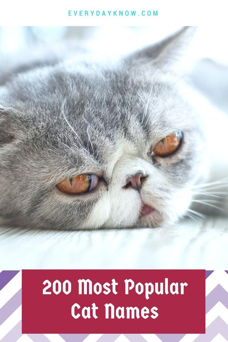 200 Most Popular Cat Names Most popular cat names, Cat