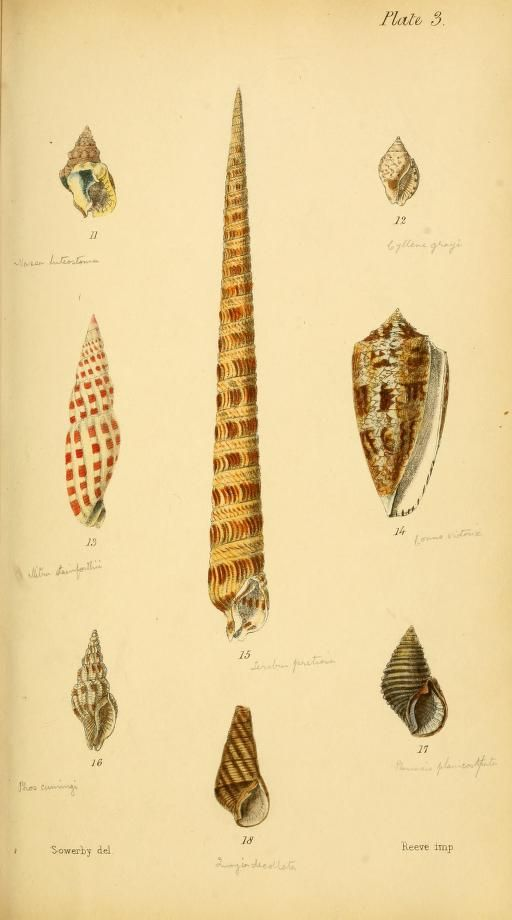 Initiamenta conchologica, or, Elements of conchology - Biodiversity Heritage Library #nature #shells #scientific #illustration