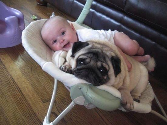 bébé et chien dans le berceau