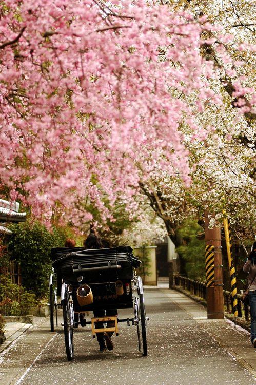 kyoto: Wouldn't it be cool to entertain guests with carriage rides while they wait for the reception?