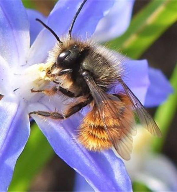 7 Astuces Surprenantes Pour Attirer Les Abeilles Au Jardin