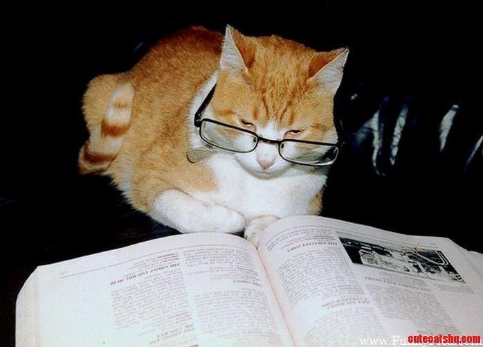 Prof. Dr. Dr. With. Von der Katze – animals