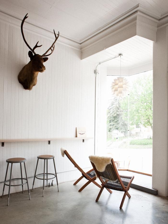 Deer head for lounge?