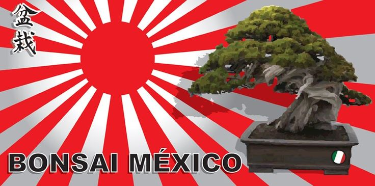 Comunidad dedicada al cultivo de árboles Bonsai. . BONSAI MÉXICO