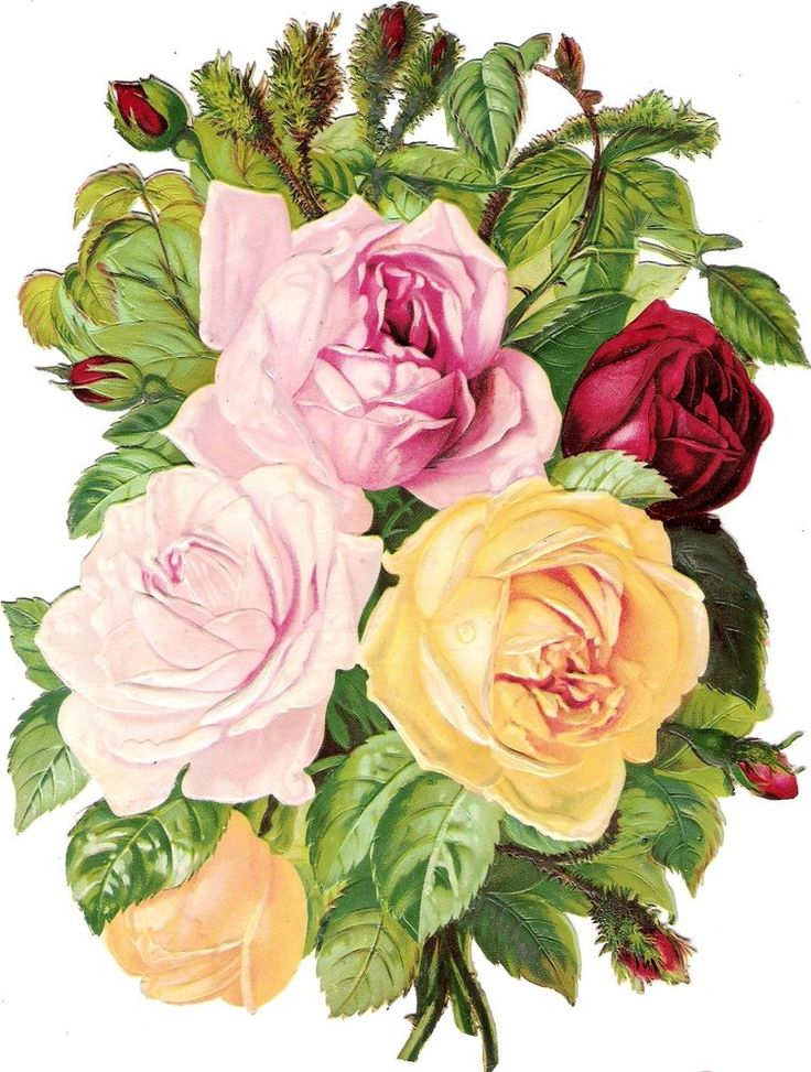 Oblaten Glanzbild scrap die cut chromo Rosen Strauß XL 23,5 cm Rose flower