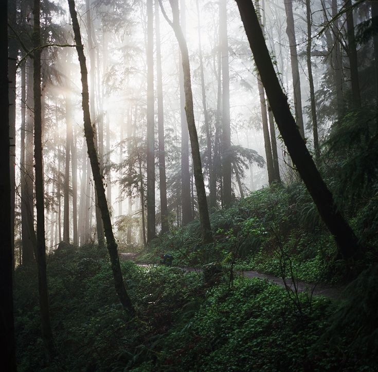 Forest Park, Portland, Oregon.  Fancy a hike?  Step into an enchanting forest...at Forest Park.  Stretching for more than 8 miles (13 km) on hillsides overlooking the Willamette River, it is one of the country's largest urban forest reserves!