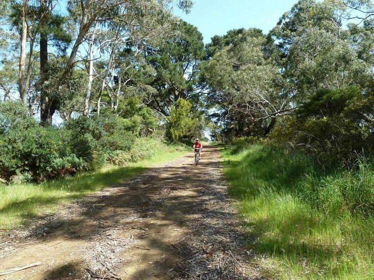 Rail trail | bush along the trail | Koroit | Port Fairy | Victoria