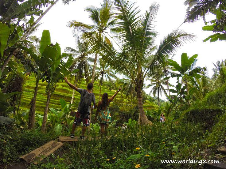 Rice terraces #Ubud #bali