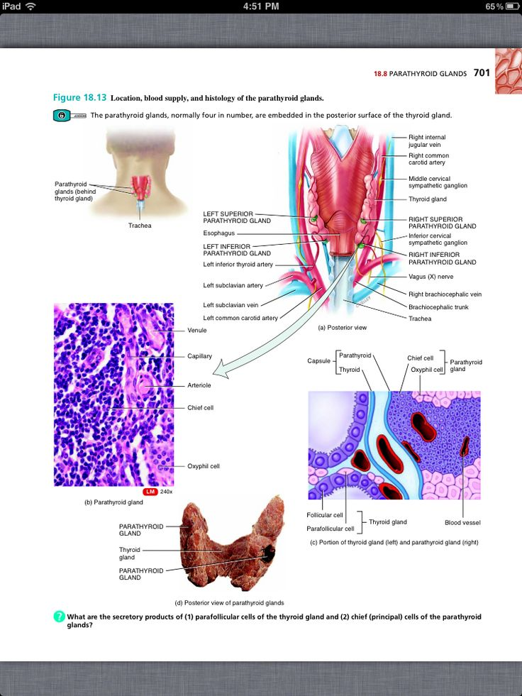 49 best Chapter 18, The Endocrine System images on Pinterest | Book ...