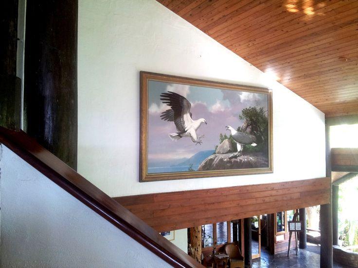 Eagles soar #thalabeachlodge
