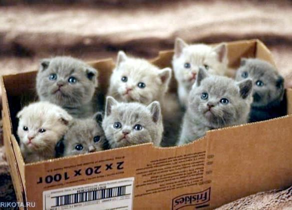 a box full of kittens.