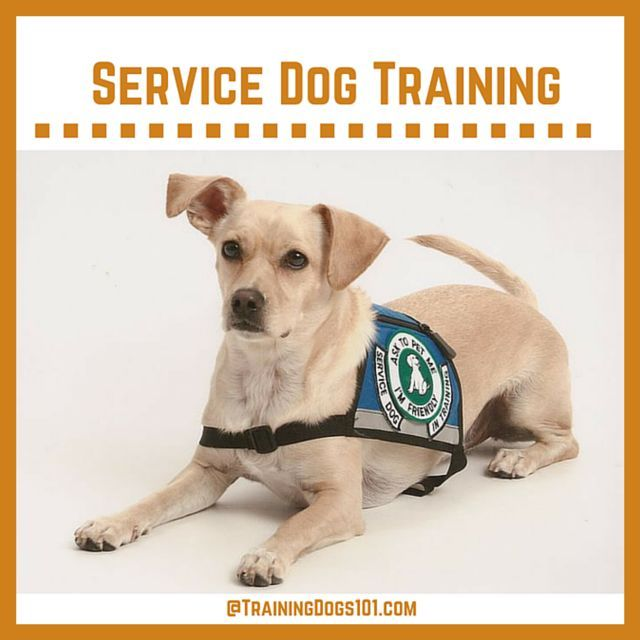 how much do service dog trainers make