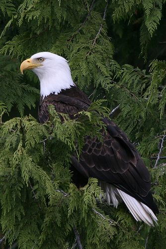 Stay with us at Hyatt Regency Chesapeake Bay and visit Blackwater Wildlife Refuge where you could spot a Bald Eagle - Awesome !