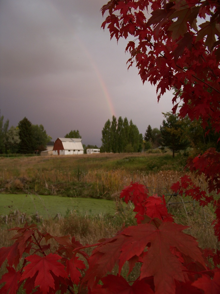 Love this photo of the country with the old barn and rainbow in the background.