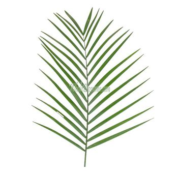 Wholesale Fresh Teepee Filler And Green Flower For Sale
