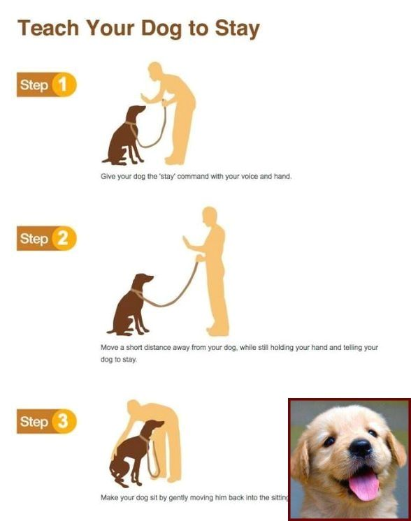 House Training A Puppy With Crate And Clicker Training Dogs Pdf