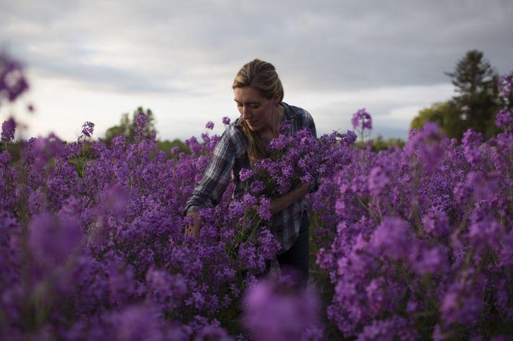 Harvest time at Floret Flower Farm.