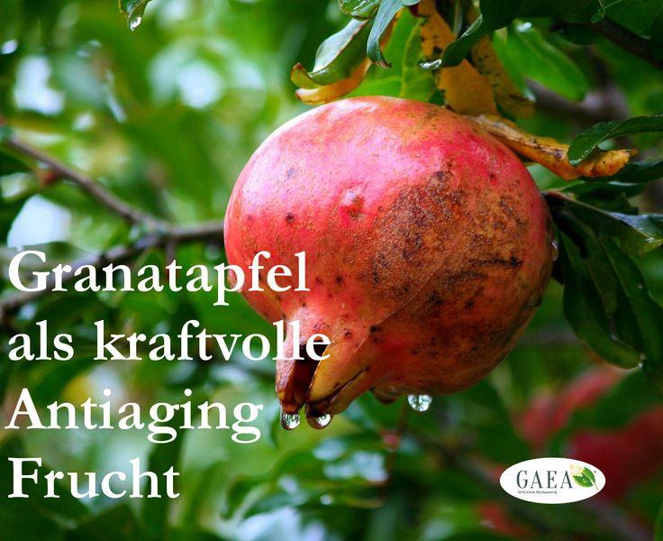 Gut zu wissen: Das Öl der Granatapfelsamen ist reich an mehrfach ungesättigten Fettsäuren. Sie fangen freie Radikale ab, fördern die Zellbildung und die Regeneration der Oberhaut.  Nicht umsonst ist der Granatapfel seit Jahrtausenden ein Symbol für Leben und Fruchtbarkeit. Hier  unser Granatapfel-Smoothie #Rezept:  - Saft + Kerne von 1      Granatapfel - 250ml Sojamilch - alles kräftig mixen - FERTIG.  Euch allen eine strahlende Woche mit www.gaea-kosmetik.de
