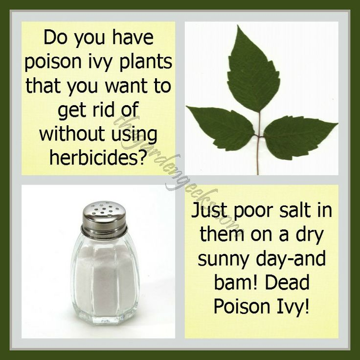 Poison Ivy Killer | For seed giveaways, daily tips and plant info, come join us on facebook! https://www.facebook.com/thegardengeeks