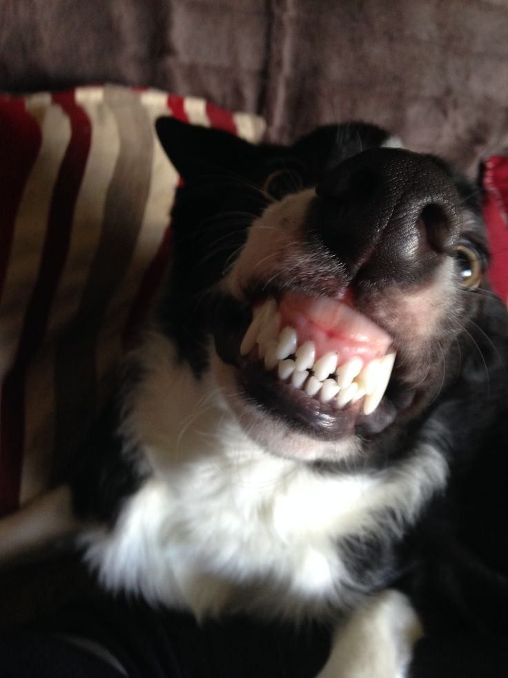 Monty says cheese