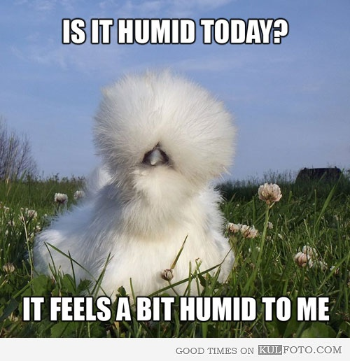 Is it humid today? It feels a bit humid to me.  My hair when I go anywhere even a bit humid...