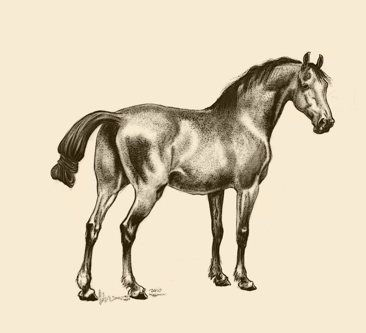 Brahma Kumaris Positive Thinking Quotes: 1000+ Images About Horse In Art On Pinterest