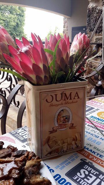 Proteas in 'n Ouma-beskuitblik.