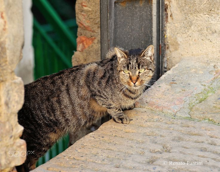 Beautiful Tiger! - Taken in Chianciano, Tuscany, Italy. (November 2016)