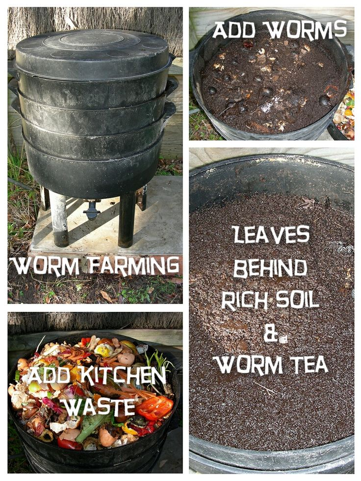 Vermicomposting, Worm Farming and Worm Composting – It's All the Same