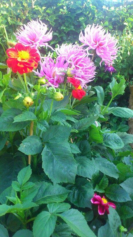 Blomster krukke i brænde stakken