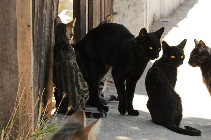 Miau Miau Miau | por Nadie dijo Nada...