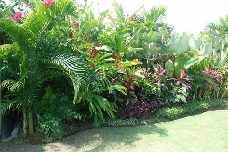 plantas y jardines tropicales