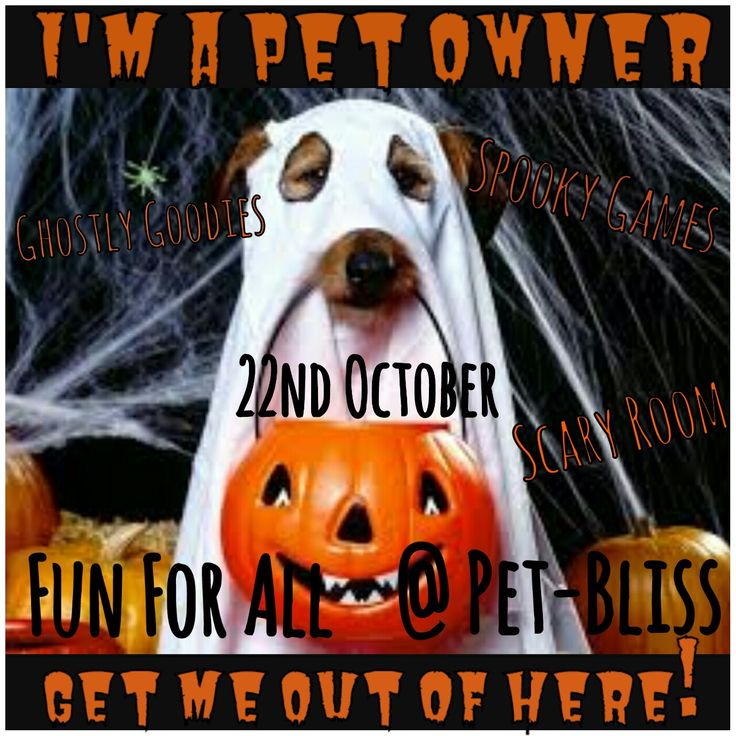 Halloween party at Pet-bliss  22nd of October 2016
