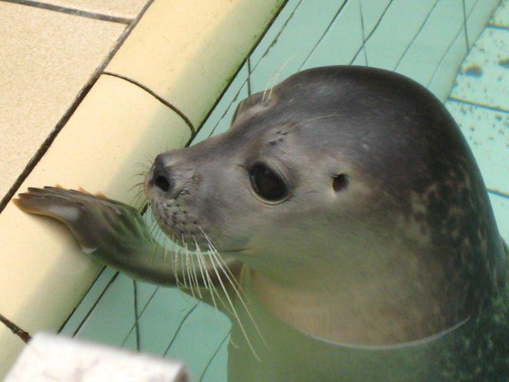 Ecomare is vooral bekend als zeehonden opvangcentrum. Ecomare bevindt zich nabij De Koog op Texel.