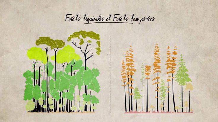 Vidéo :  Forêts tropicales et forêts tempérées. Francis Hallé.