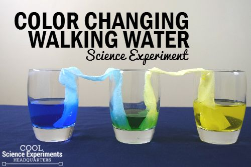Coloring Changing Walking Water Science Experiment